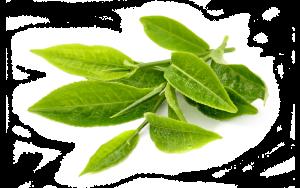 green-tea-fr